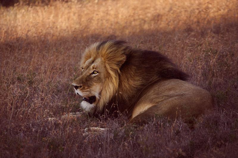 IMG_5336-Editdenstoraresan,-familjen,-safari,-sydafrika