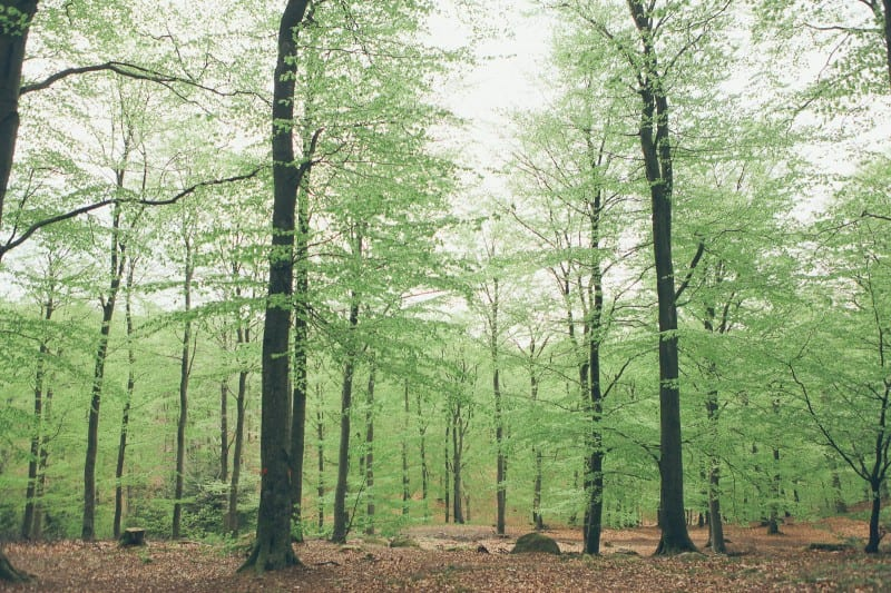 Hålehall-Bjäre-Skog-Vår-Förslöv