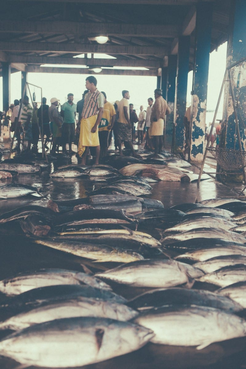 Sri-Lanka-Dondra-Fish-Market-Sunshinestories-Blog-Photos-5483