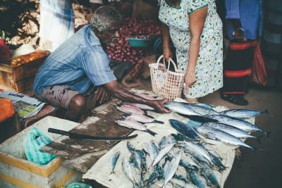 Fish at Weligama market