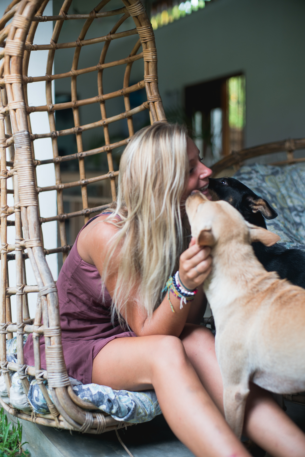 dogs-sri-lanka