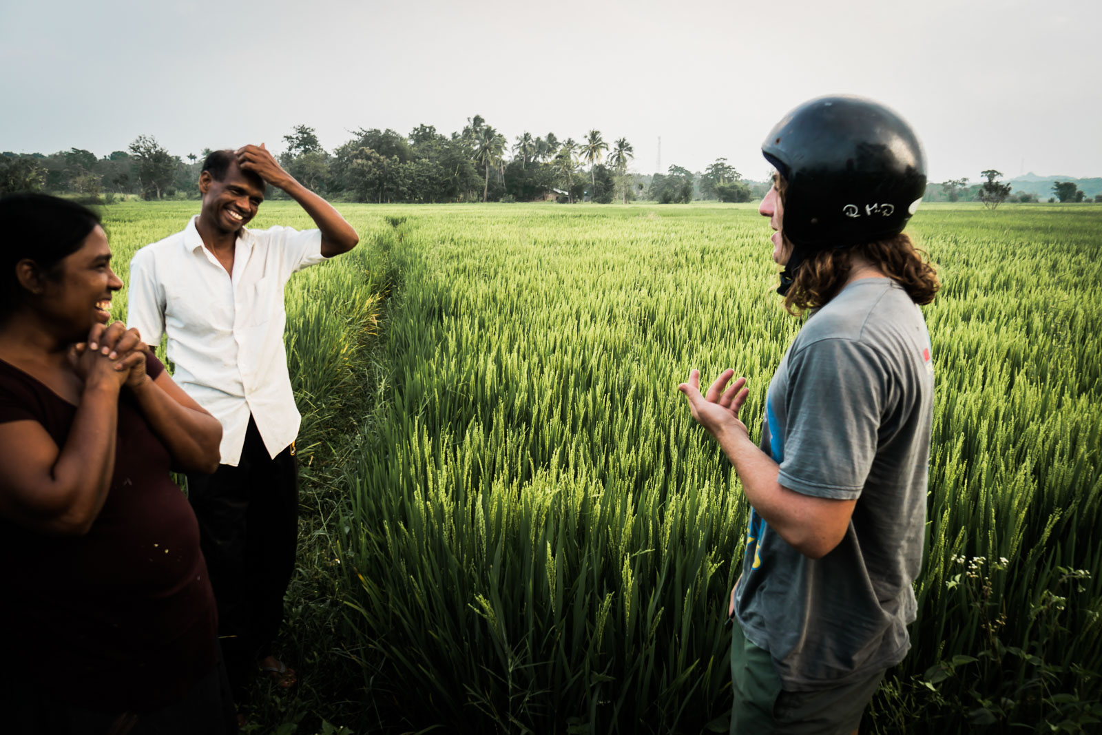 rice-harvest-sri-lanka