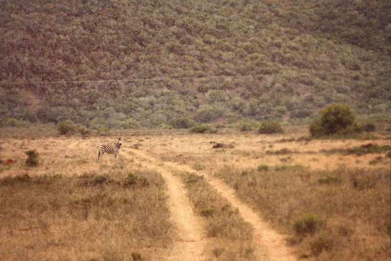 IMG_4418-Editdenstoraresan,-familjen,-safari,-sydafrika