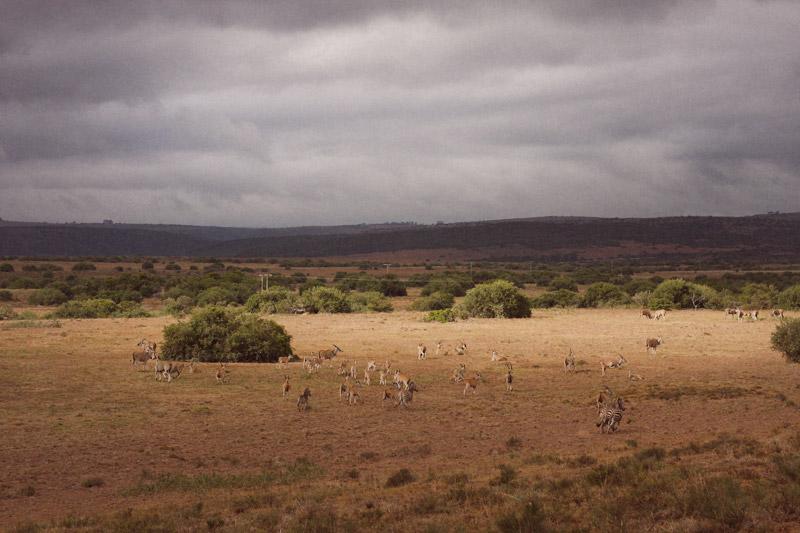 IMG_4491-Editdenstoraresan,-familjen,-safari,-sydafrika