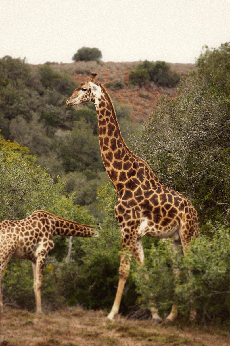 IMG_4516-Editdenstoraresan,-familjen,-safari,-sydafrika