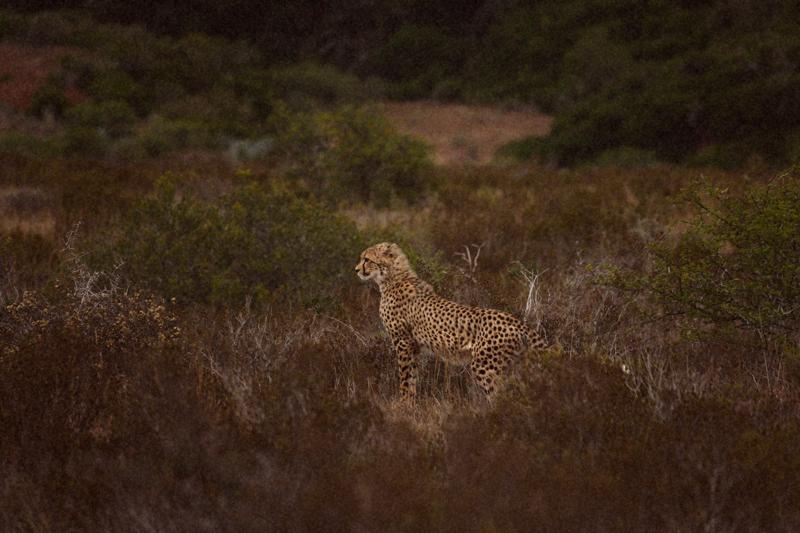 IMG_4712-Editdenstoraresan,-familjen,-safari,-sydafrika