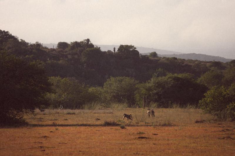 IMG_4852-Editdenstoraresan,-familjen,-safari,-sydafrika