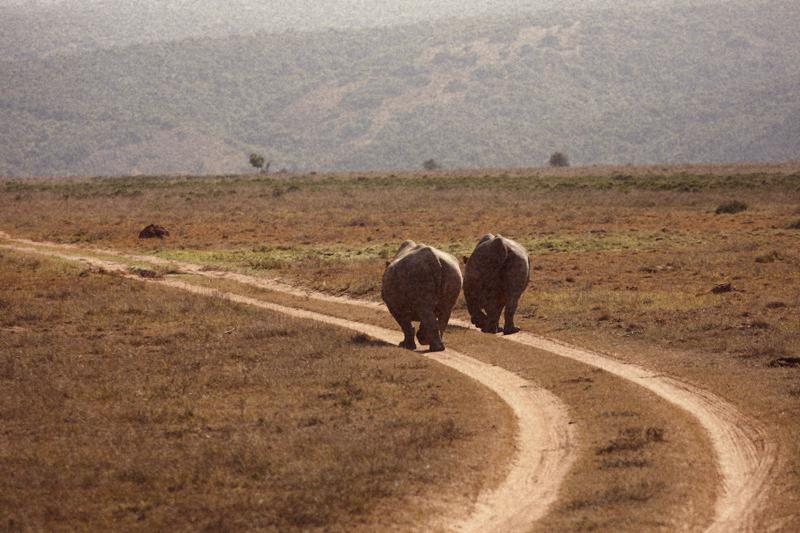 IMG_4940-Editdenstoraresan,-familjen,-safari,-sydafrika