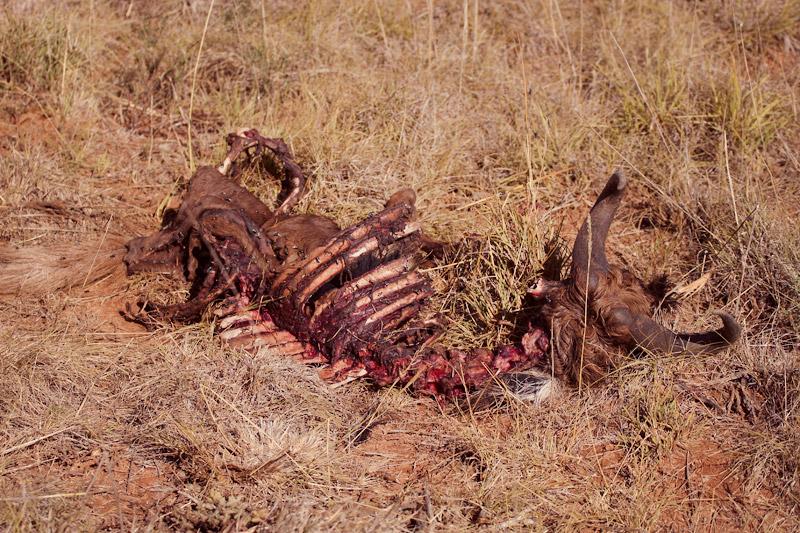 IMG_4953-Editdenstoraresan,-familjen,-safari,-sydafrika