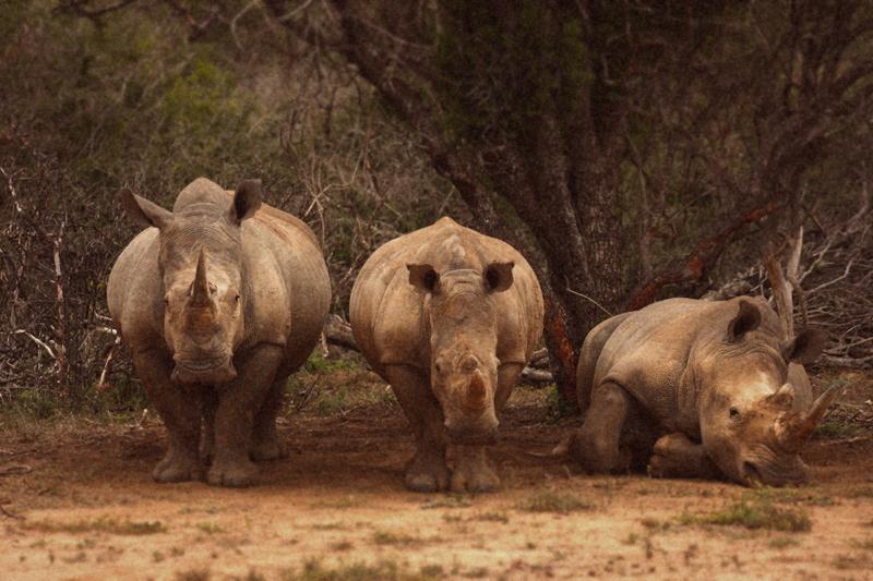 IMG_5002-Editdenstoraresan,-familjen,-safari,-sydafrika_2