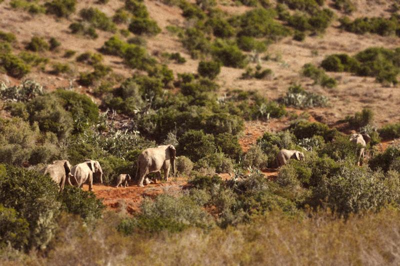 IMG_5156-Editdenstoraresan,-familjen,-safari,-sydafrika