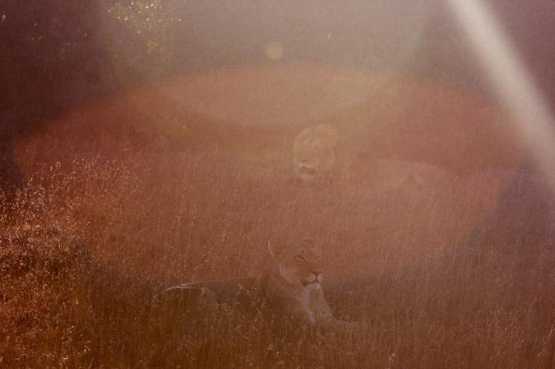 IMG_5304-Editdenstoraresan,-familjen,-safari,-sydafrika
