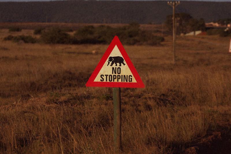 IMG_5344-Editdenstoraresan,-familjen,-safari,-sydafrika