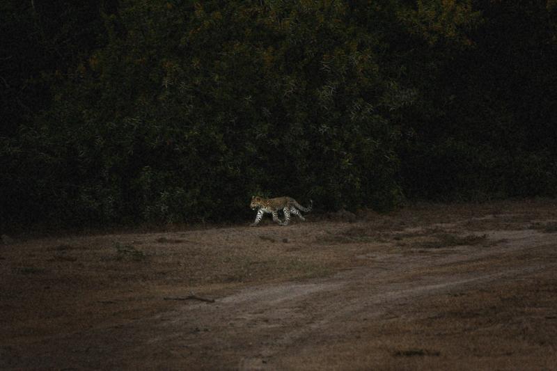 IMG_5404-Editdenstoraresan,-familjen,-safari,-sydafrika