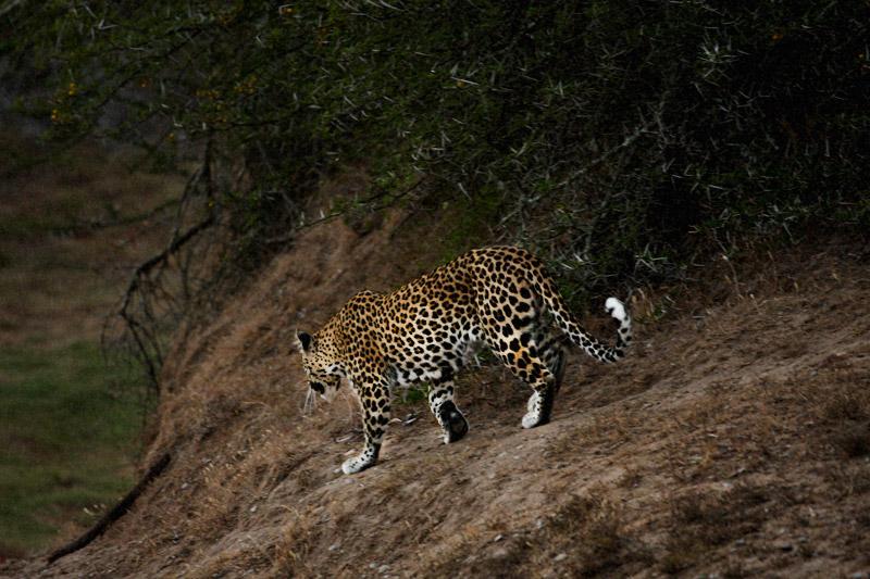 IMG_5415-Editdenstoraresan,-familjen,-safari,-sydafrika