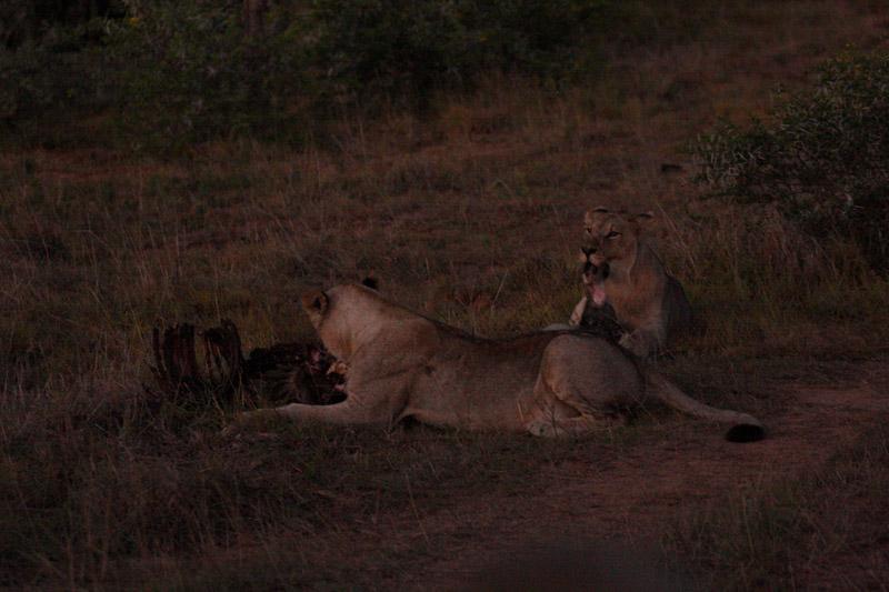 IMG_5473-Editdenstoraresan,-familjen,-safari,-sydafrika