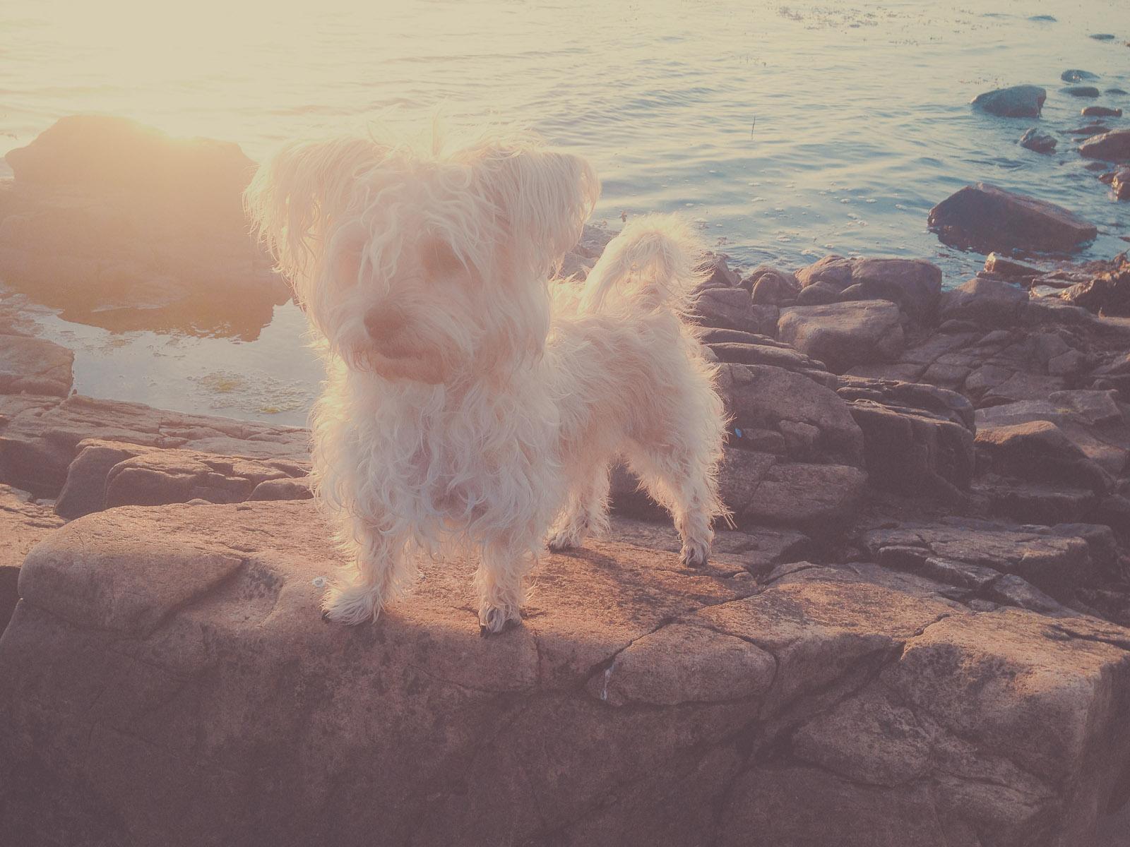 #mallithedog
