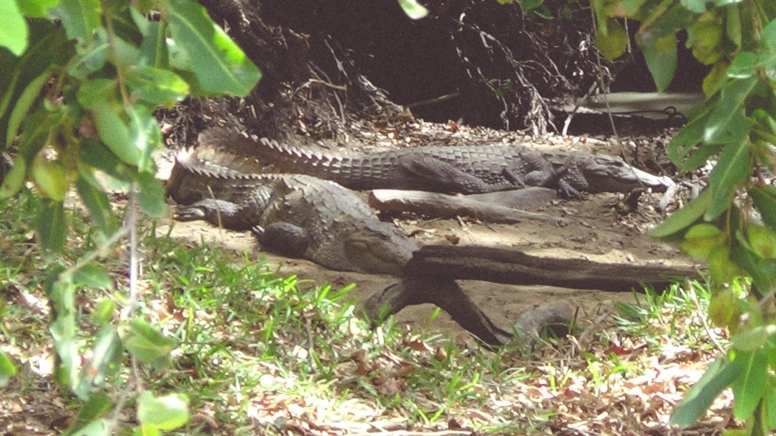 Sri Lanka-Hikkaduwa-Midigama-Aragum Bay-Sunshinestories-surf-travel-blog-DSC01970