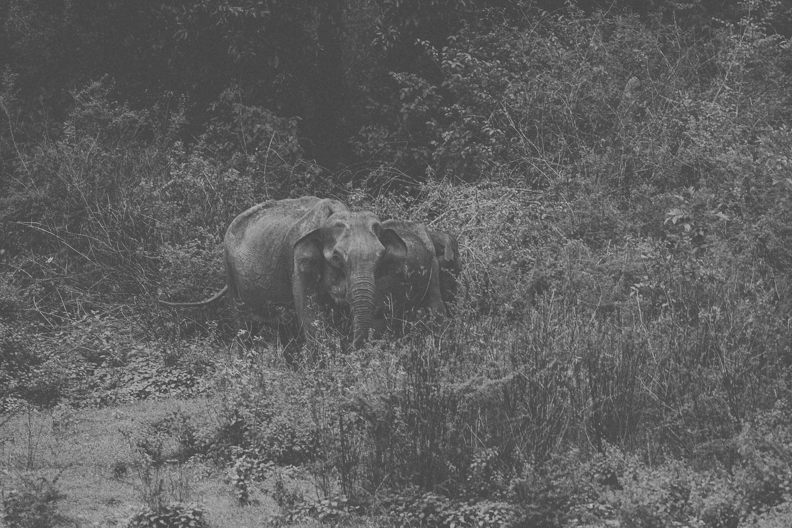 Sri Lanka-Yala-National-Park-Elephant-Wildlife-Safari-Jeep-Roadtrip-IMG_3017
