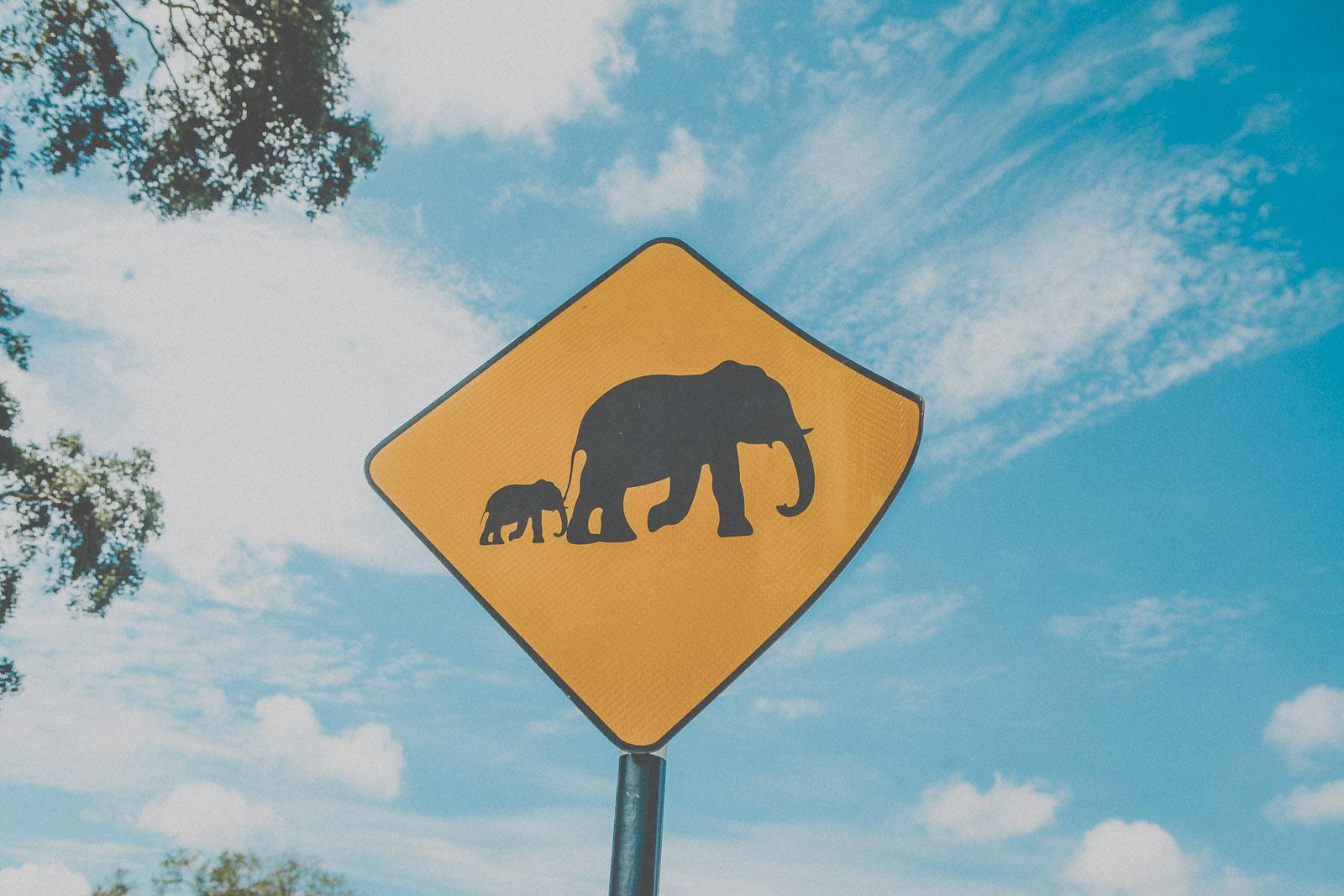 Sri Lanka-Yala-National-Park-Elephant-Wildlife-Safari-Jeep-Roadtrip-IMG_6187