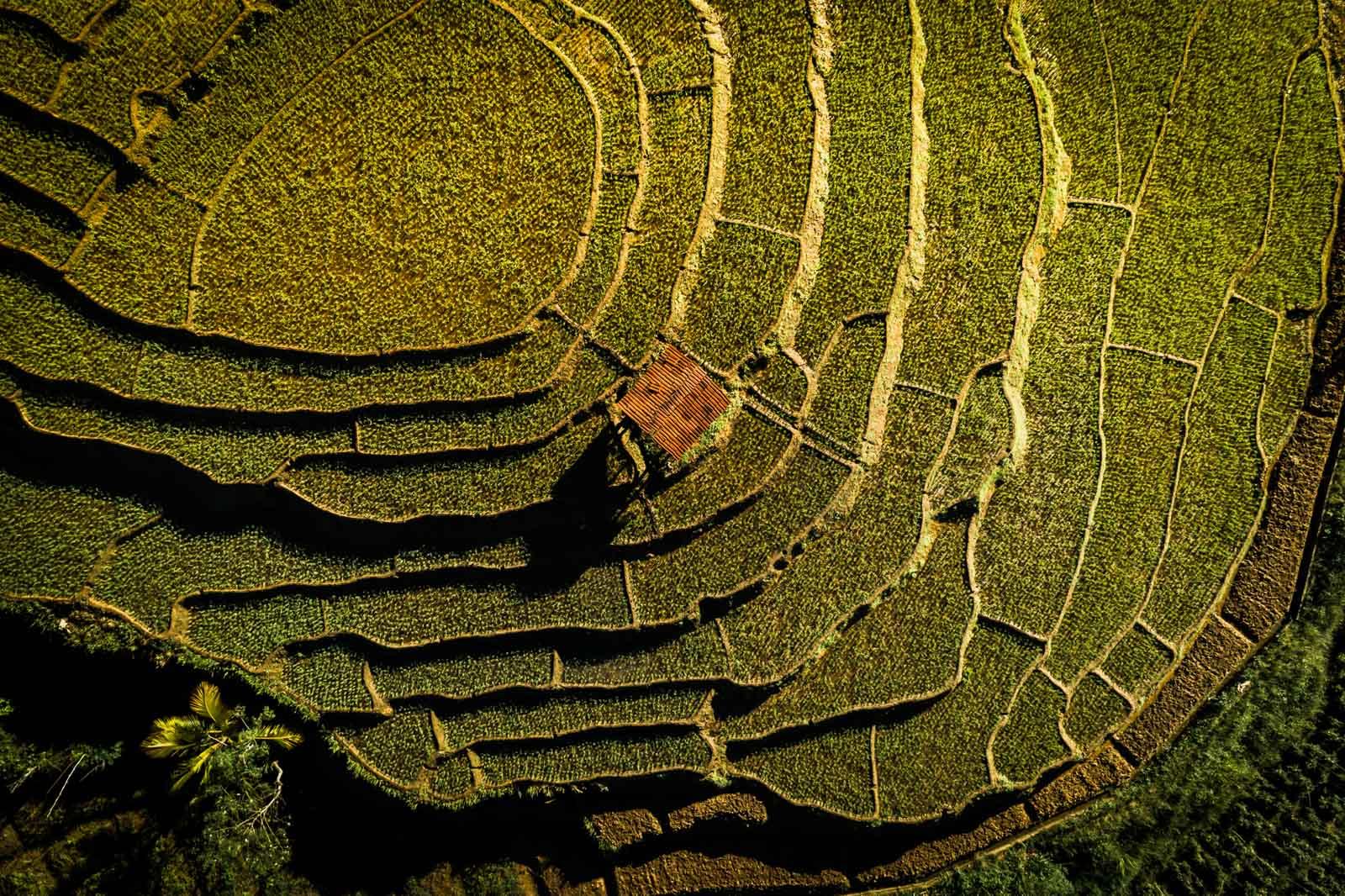 rice-terrace-sri-lanka