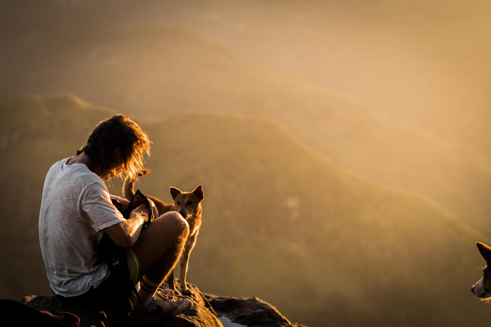 dog-sunrise-sri-lanka