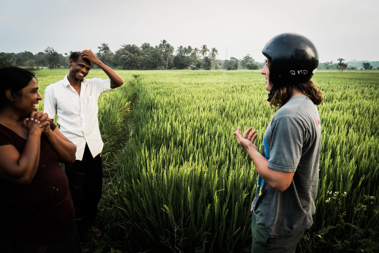 rice-harvest-sri-lanka