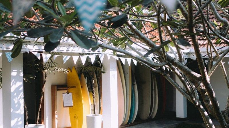Life around the frangipani tree